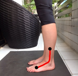 plantar flexion: wide angle at the ankle